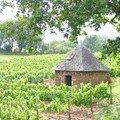 Les maisons de vigne.. en disparition