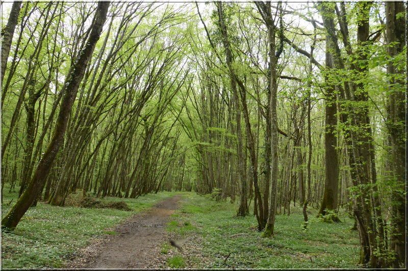 Geocaching foret d'Orleans (11)