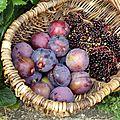 Le temps des confitures! Confiture de prune aux baies de sureau et à la <b>badiane</b>