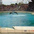 Dolphin[1]