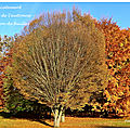 Récolte d'automne (Autumn harvest)