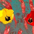 04B. Duo de tulipes