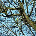 Le nid des perruches