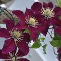jardins fleuris 0670068