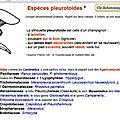 sil_pleurotoides