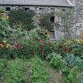 2008 09 16 Mes dahlias et mes tournesols et les légumes devant