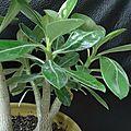 graines et plantes