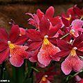 Huit jours pour les amoureux des orchidées à orléans