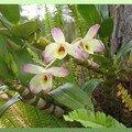 orchidée dans le jardin 2