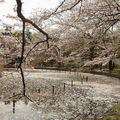<b>sakura</b> 2010