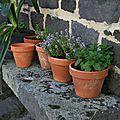 A petits pas : notre jardin