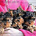 Achat d'un chiot ou adoption d'un chien - préparer son arrivée !