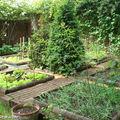 Le potager en carrés au fond du jardin