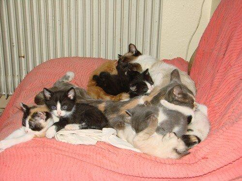 2008 04 19 Les deux mère chat et leurs petits