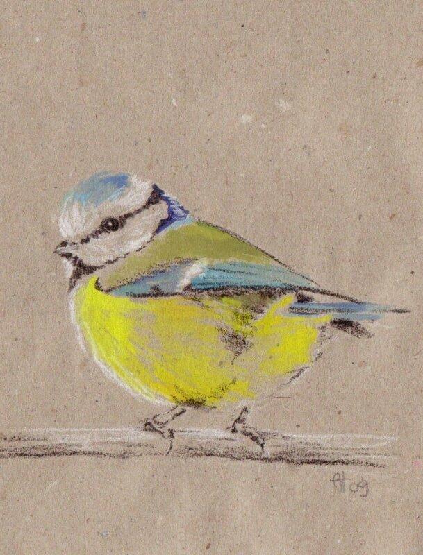 Mésange bleue- gouache et crayon sur papier