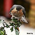 aviary-image-1518385611375