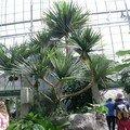 Montréal, le jardin botanique, l'insectarium et le biodôme