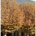 chambéry en automne