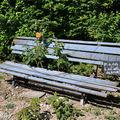 Le banc tagué du vilain petit jardin de Jean-Michel Vilain