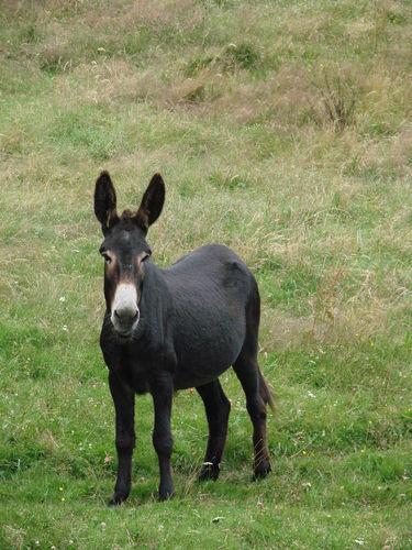 2008 07 21 Un âne