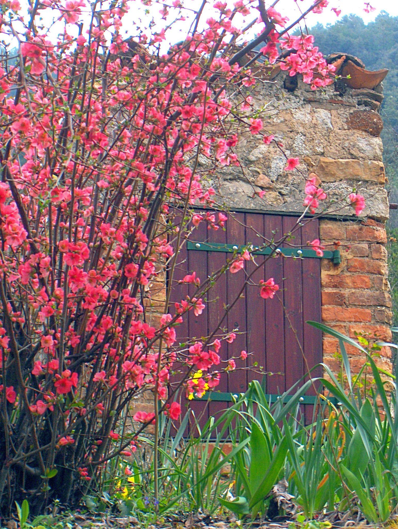 cabane très printemps