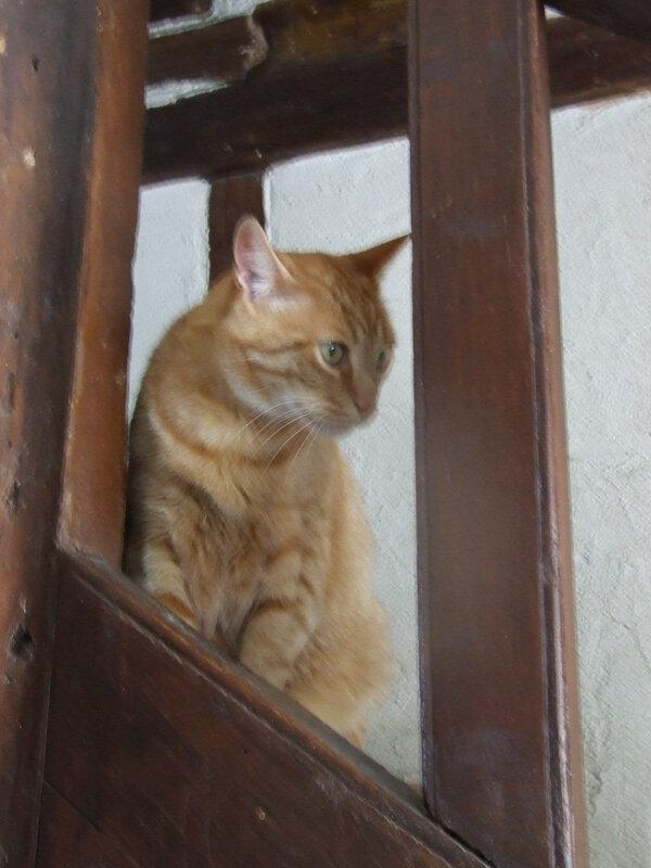 Domino dans les escaliers
