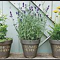 Pots de Fleurs en Terre Cuite Emaillée - Graine de Champion - Marie Jeanne - Mauvaise Herbe - <b>Pied</b> de <b>Poule</b>