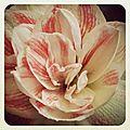 L'instant clic & clic & ... - instagram #6
