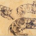 Trois dessin de chats. Eugène Delacroix. Musée du Louvre. Paris.