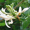 Fleurs de Leon 24061631