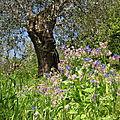 Journées du patrimoine 2011 nice parc naturel du vinaigrier