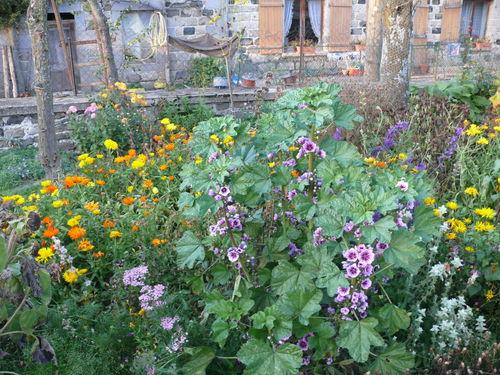 2008 10 14 Quelques fleurs de mon jardin