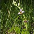 Quelques Orchidées du jardin