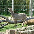 Au <b>zoo</b> de <b>Beauval</b> (5-Fin)