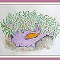 38 - Symbiose entre le <b>poisson</b> <b>clown</b> et l'anémone de mer