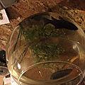 Mes poissons télescope et poison noire et rouge