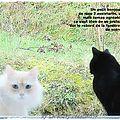 Un tit bonjour de mes chats et rappel de mon jeu
