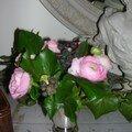 encore du rose....