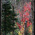 L'automne... - cake aux champignons.