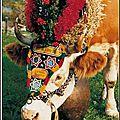 vache retour d'estive