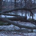 L'arbre des voyelles en hiver