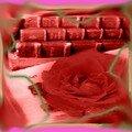 Un livre et une rose