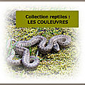 Collection reptiles : les COULEUVRES