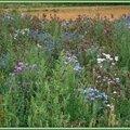 Prairie fleurie 1108158