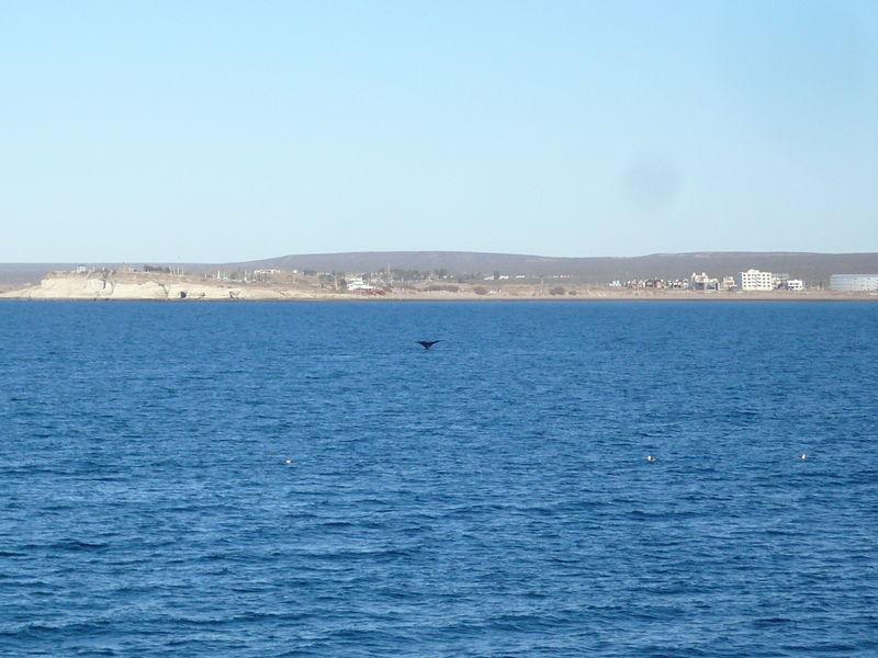 Cola de ballena...une petite danse