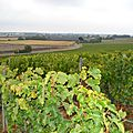 Ces vignerons vendéens bâtisseurs