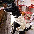 Pull irlandais pour chien
