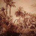Alger-jardin d'éssai