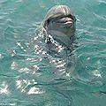 Le dauphin, une personne comme les autres