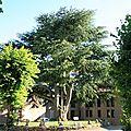 IMG_8833 Cèdre de Rocamadour